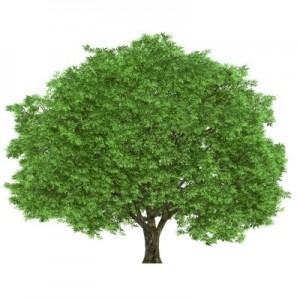 """""""But of the tree of the knowledge of good and evil, thou shalt not eat of it"""" Genesis 2:17"""