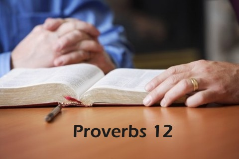 Proverbs 12 Bible Study and Commentary