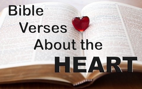 7 Encouraging Bible Verses About The Heart