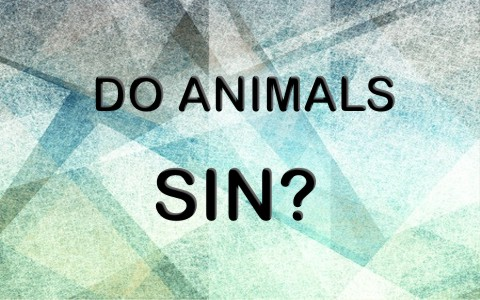 Do Animals sin