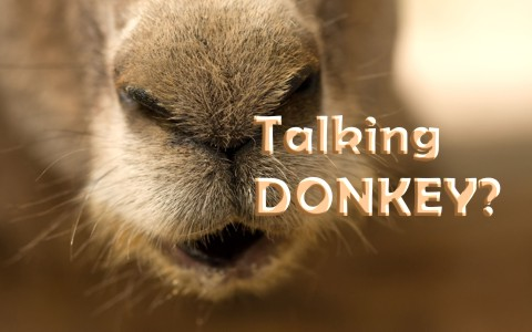 What Is The Story Of The Talking Donkey In The Bible