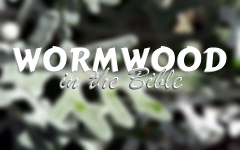 What Does Wormwood Mean When Used In Revelation