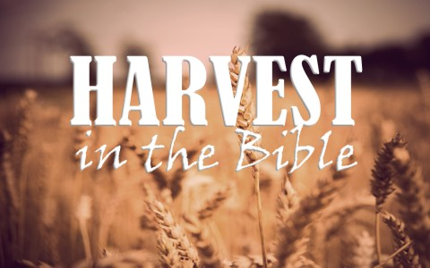 What Does the Bible Say About Harvest?