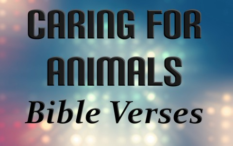 8 Awesome Bible Verses About Loving and Caring For Animals